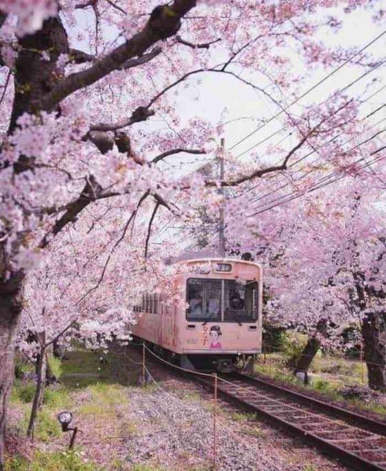 [vi] Culture conner Sakura