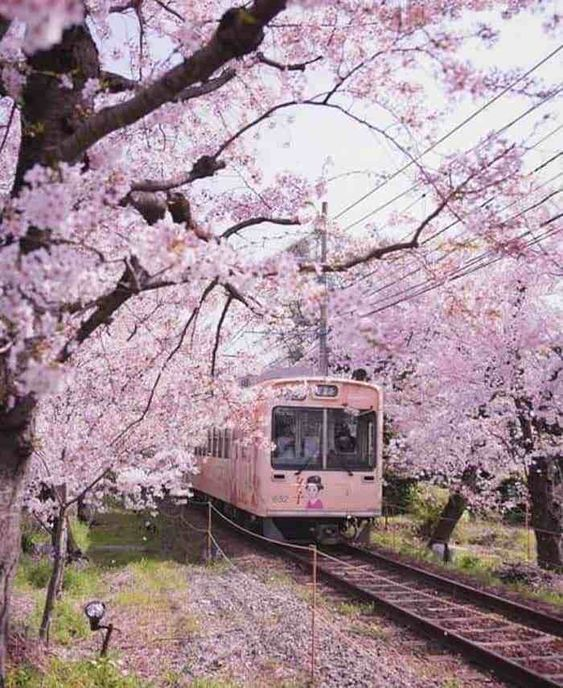 [en] Culture conner Sakura